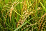 Plastic Rice Seized in Nigeria - Carlos Gamino, Milwaukee