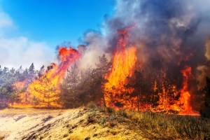 California's Wildfire Problem - Carlos Gamino