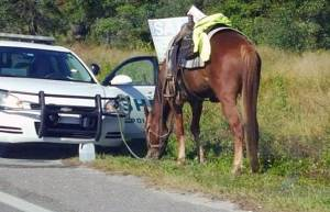 "By Carlos Gamino A woman in Florida was charged with DUI after riding a horse drunk. The 53-year-old woman from Lakeland was busted riding her horse down a busy highway while intoxicated. Several drivers called police (horses aren't allowed on the interstate anywhere), and Polk County Sheriff's officials responded. The woman was riding her horse in the road, and when police gave her a breath alcohol test, she blew more than twice Florida's legal limit. ""[The woman] was obviously not in any condition to be on the road,"" Polk County Sheriff Grady Judd said. ""She not only put herself and the horse in danger, but also anyone who was driving on the road, which is typically very busy."" The woman was booked into jail. Her past criminal record includes five felonies and 10 misdemeanors, including those for animal cruelty, drug possession, and other crimes. It's not illegal in every state, though. In fact, a Louisiana man was able to escape a DUI charge when he hitched a ride from his horse in 2015. The horse was waiting patiently outside a bar for him, tucked safely in a horse trailer. Fortunately, the man recognized that he was too inebriated to drive – and although authorities couldn't arrest him for DUI because he wasn't in a motorized vehicle, he did get a ticket for public intoxication. In Texas and Alabama, it's definitely illegal; in Michigan, too. One man was arrested for riding a horse through Boulder, Colorado while drunk. The bottom line: It might be safer to ride a horse home if you've been drinking, but it's probably better to Uber. What Do You Think? Do you think it should be illegal to ride a horse while drunk? Is it a form of animal cruelty, or are horses really man's best friend at 2 a.m.? I'd love to hear your thoughts, so please share your comment on my Facebook page or on Twitter! Carlos Gamino"